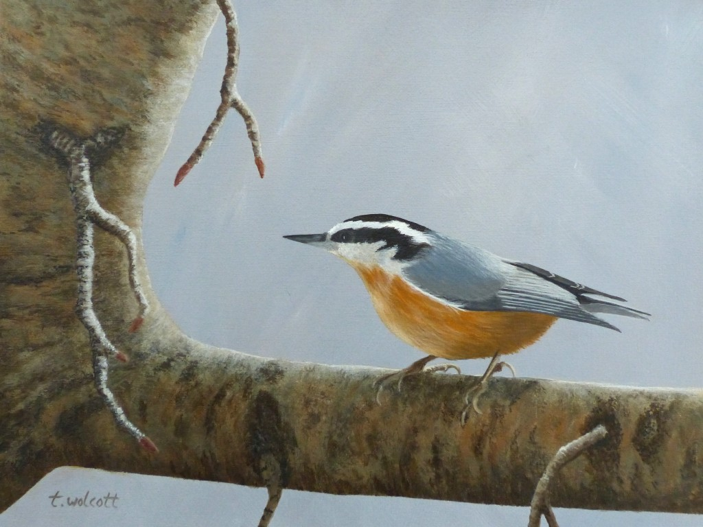 PENSIVE NUTHATCH: Private Collection