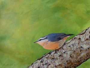 NUTHATCH AT MAGGIE'S: Private Collection