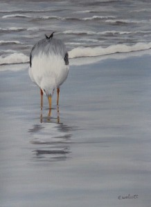 SIPPING SEAGULL